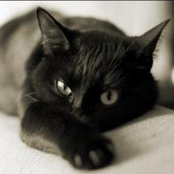 Милые и ласковые кошки в последнее