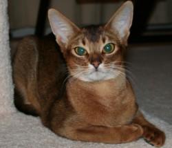 Статьи и интересные факты о кошках