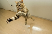 кошка в вертикальном прыжке