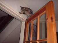 кошка-альпинист